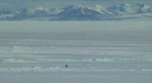 The Herzog Penguin