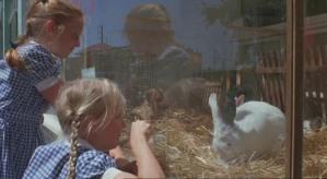 Celia's experience of rabbits