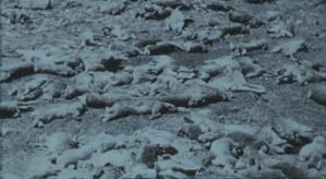 Image of the Rabbit Plague